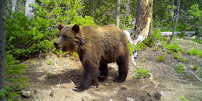 Recreational Impacts on the Wildlife of the South Chilcotins