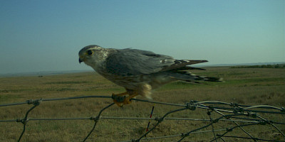 Monitoring Southwestern Alberta's Birds and Mammals